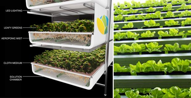 caption: a sinistra immagine da aerofarms.com; a destra immagine da powerhousehydroponics.com