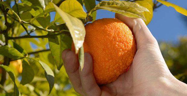 In sicilia l'energia pulita è prodotta dagli scarti delle arance