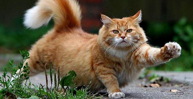 gattoparco-milano-b