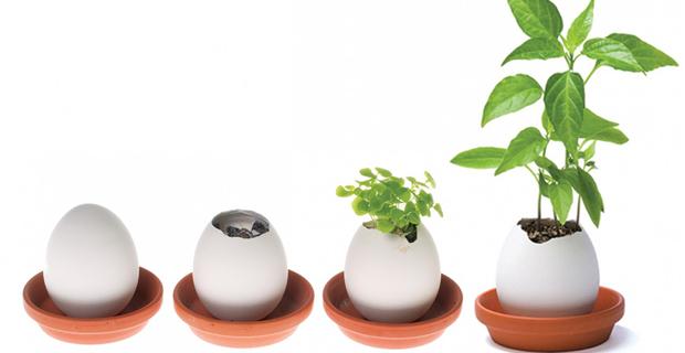 Piante In Casa Idee : Idee regalo per coltivare piccole piante in casa