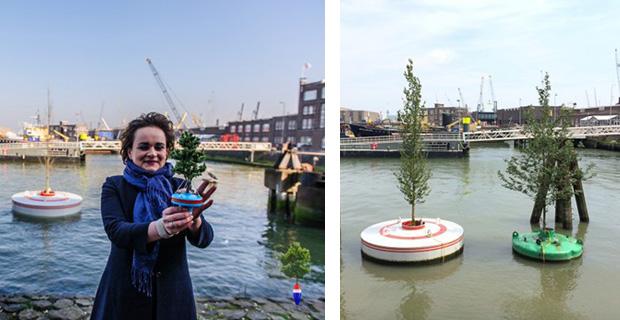 caption: a sinistra l'assessore Alexandra van Huffelen durante il lancio del primo prototipo nel 2014. L'albero era spoglio. A destra i prototipi dopo il monitoraggio di 6 mesi: gli alberi si sono riempiti di foglie! Foto da Dobberendbos.nl