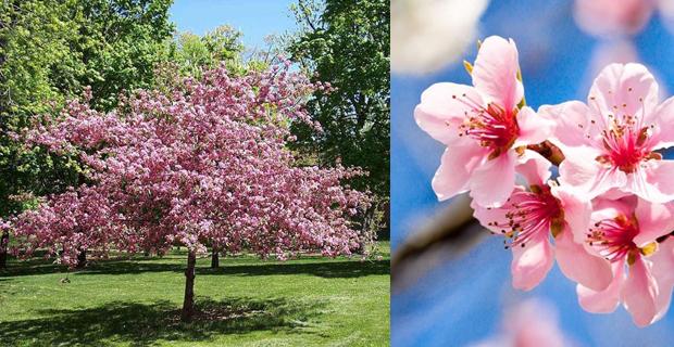 Come scegliere gli alberi giusti per piccoli giardini - Alberi sempreverdi da giardino ...
