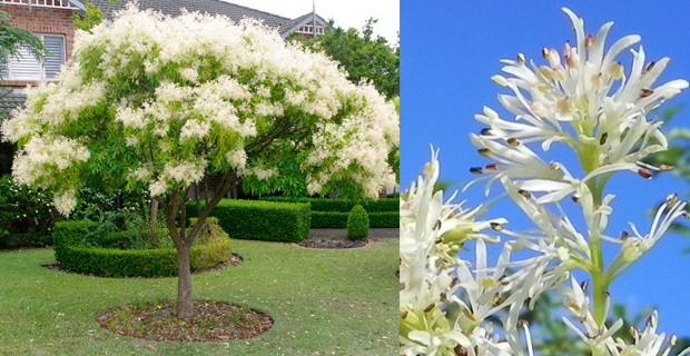 Come scegliere gli alberi giusti per piccoli giardini - Alberi da piantare in giardino ...