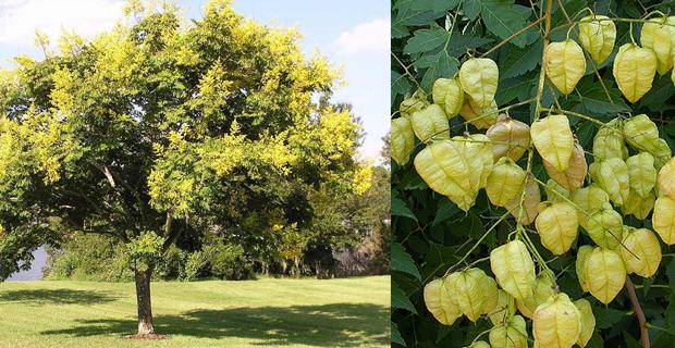Scegliere Gli Alberi Da Giardino : Come scegliere gli alberi giusti per piccoli giardini