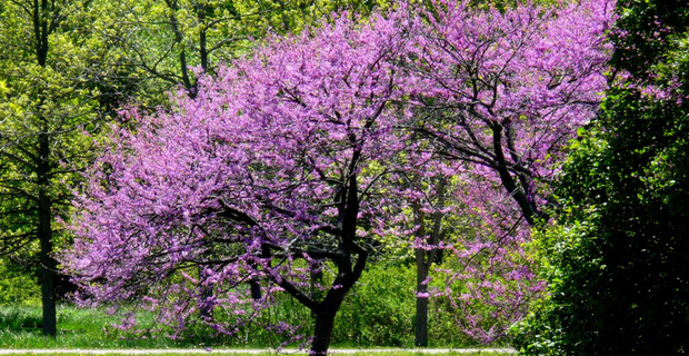 come scegliere gli alberi giusti per piccoli giardini On alberi per piccoli giardini