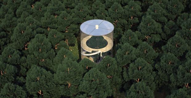 tree-house-casa-albero-c