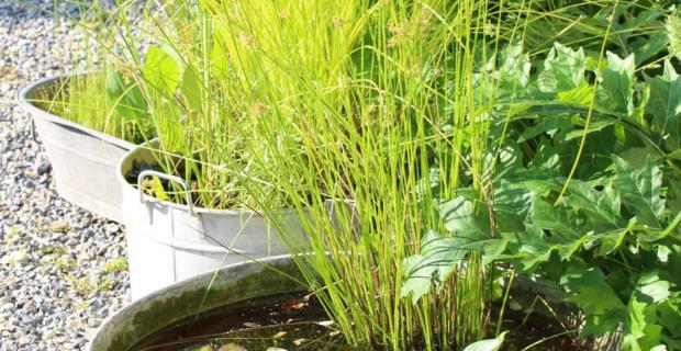 Giardini da realizzare simple piccoli giardini da for Mini pond con pesci