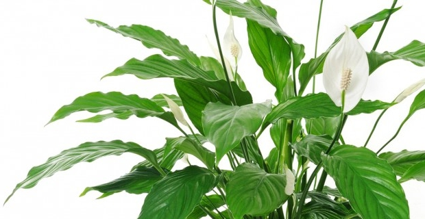 Piante da appartamento come sceglierle e prendersene cura for Solo piante