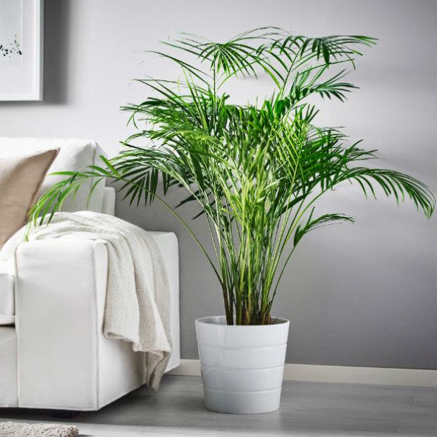 Piante da appartamento come sceglierle e prendersene cura for Piante e fiori da appartamento
