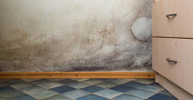 Pitture antimuffa naturali per prevenire la muffa in casa - Condensa in casa nuova costruzione ...