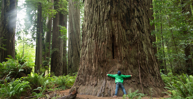 Norme e leggi sul censimento degli alberi monumentali