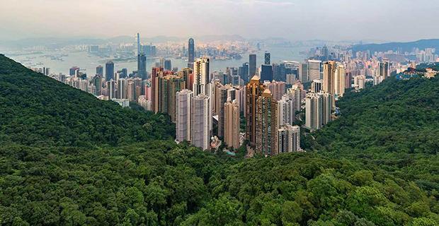 La coalizione tra città e foreste di Cities4forest.