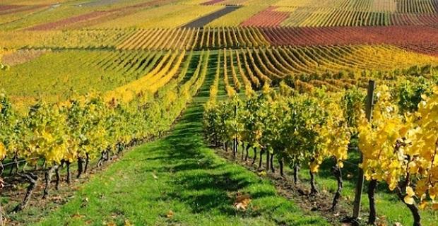 Percorsi di vino in Italia